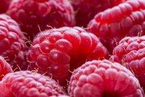 Framboesas frescas maduras — Fotografia de Stock