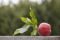 Manzana recién cosechada con hojas - foto de stock