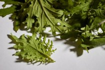 Folhas de couve fresca bebê — Fotografia de Stock