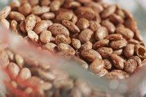 Organic pinto beans — Stock Photo