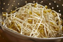 Brotes de soja fresca - foto de stock