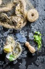 Top view of fresh oysters on ice in net — Stock Photo