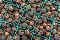 Cestini di noci di macadamia nelle coperture — Foto stock