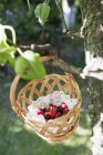Closeup view of fresh wild berries in a basket hanging on tree — Stock Photo
