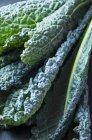 Lacinato folhas de couve — Fotografia de Stock