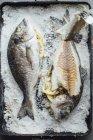 Orata al forno — Foto stock