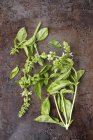 Top view of sprigs of basil with flowers on a metal surface — Stock Photo
