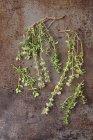 Fresh sprigs of thyme — Stock Photo