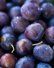 Prugne fresche con le goccioline di acqua — Foto stock