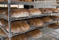 Loaves of Graham bread — Stock Photo