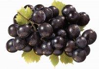 Спелый чёрный виноград — стоковое фото