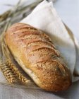 Frisch gebackenes Brot — Stockfoto
