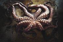 Fresh octopus in pan — Stock Photo