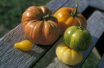 Fraîchement cueillies tomates colorées — Photo de stock