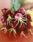 Oignons rouges de printemps — Photo de stock