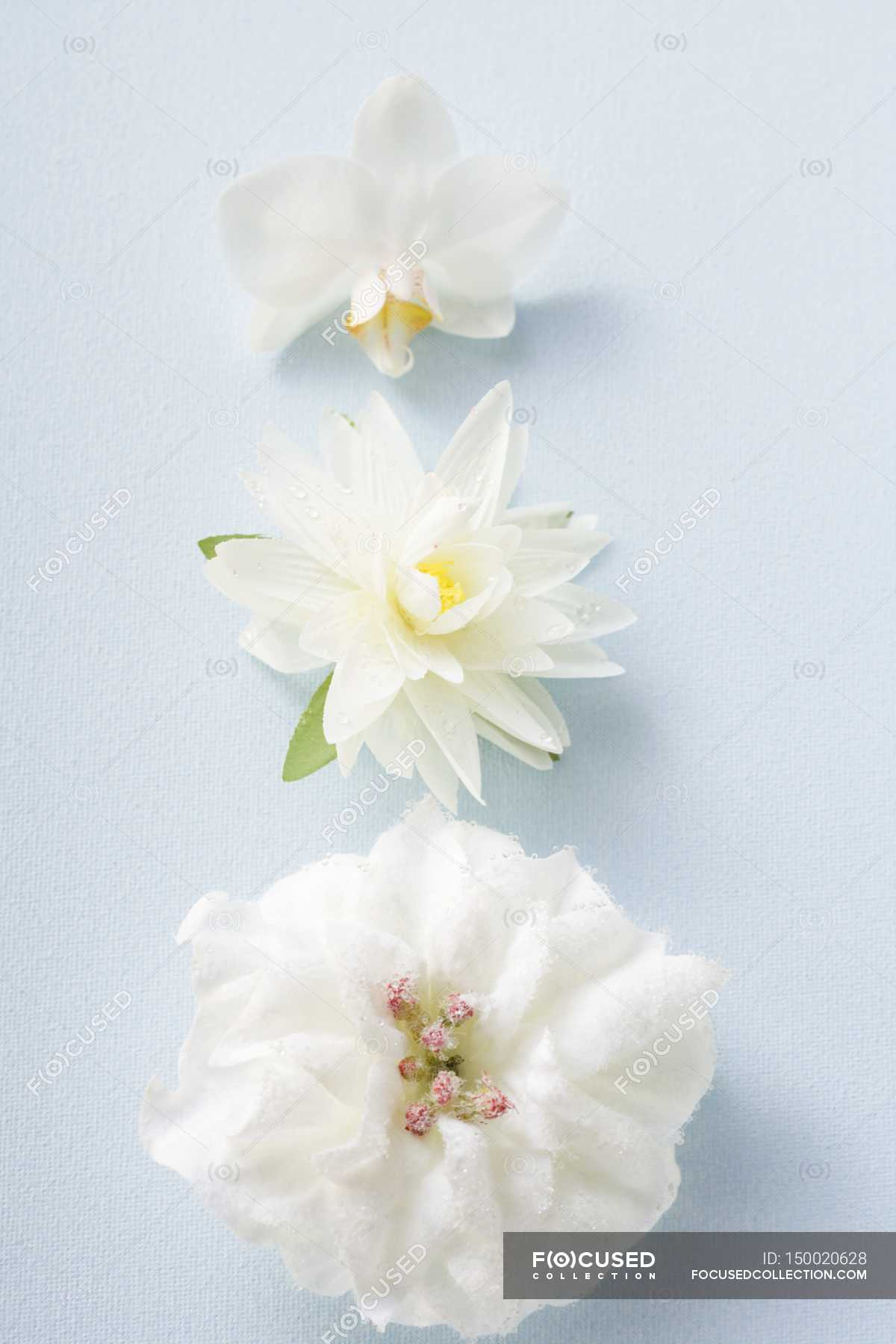 Closeup View Of Three Different White Flowers On Blue Surface
