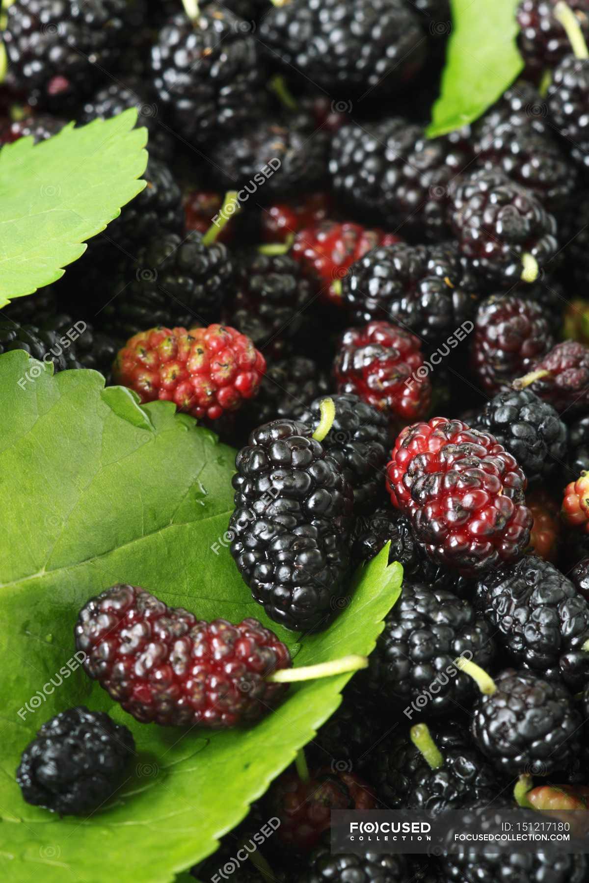 Fresh Mulberries In Heap