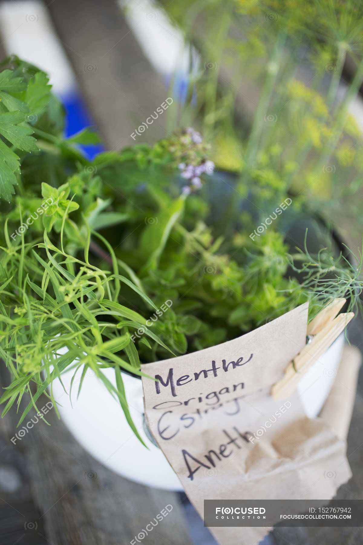 Planter Menthe En Pot closeup view of various fresh herbs in pot with tag — color