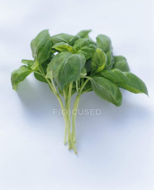 Bunch of Fresh Basil — Stock Photo