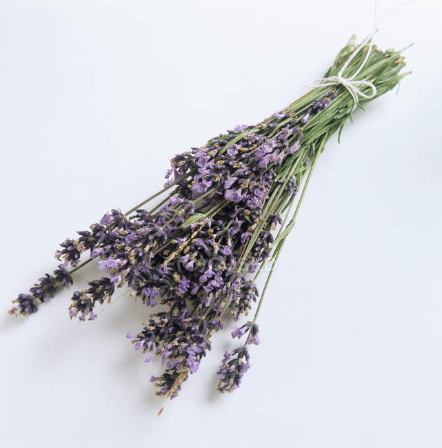 Bunch of lavender, close-up view — Stock Photo
