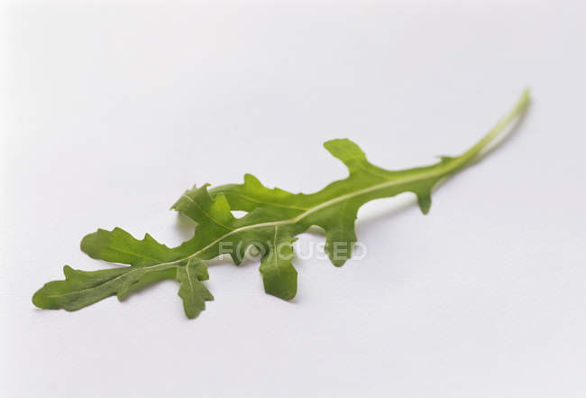 Fresh green Arugula — Stock Photo