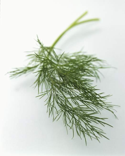 Sprig of Green Dill — Stock Photo