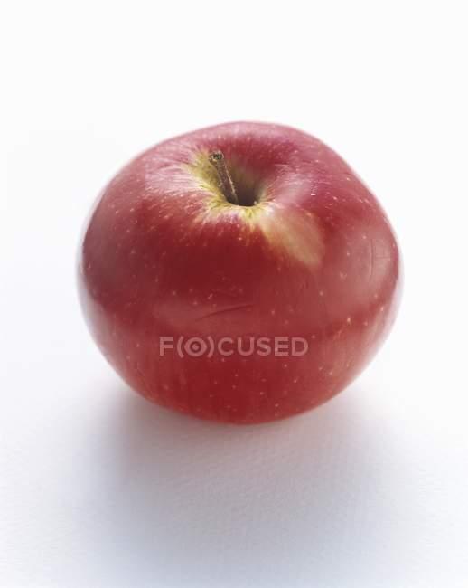 Whole McIntosh Apple — Stock Photo