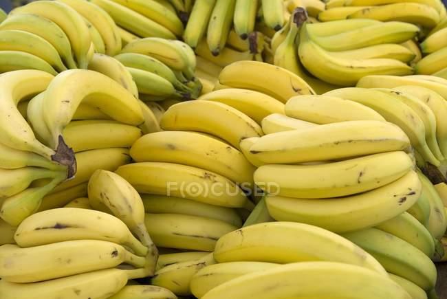 Пучки стиглі банани — стокове фото