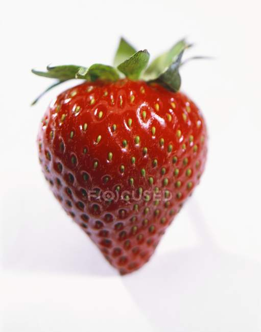 Strawberry with green leaves — Stock Photo