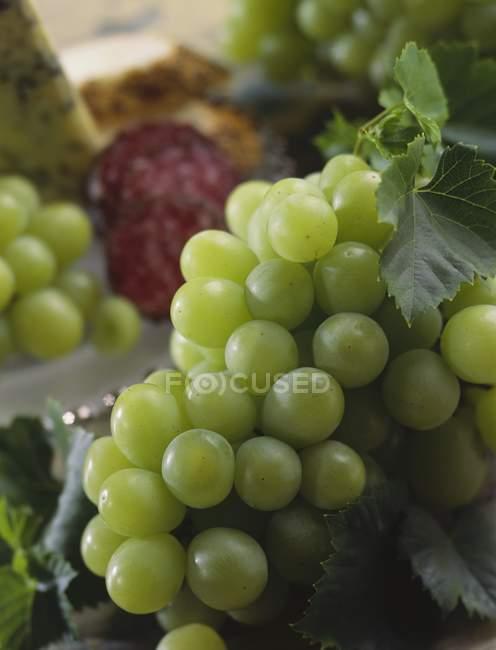 Frische grüne Trauben — Stockfoto