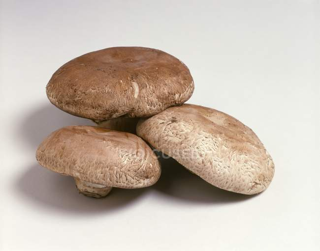 Three Portobello mushrooms — Stock Photo