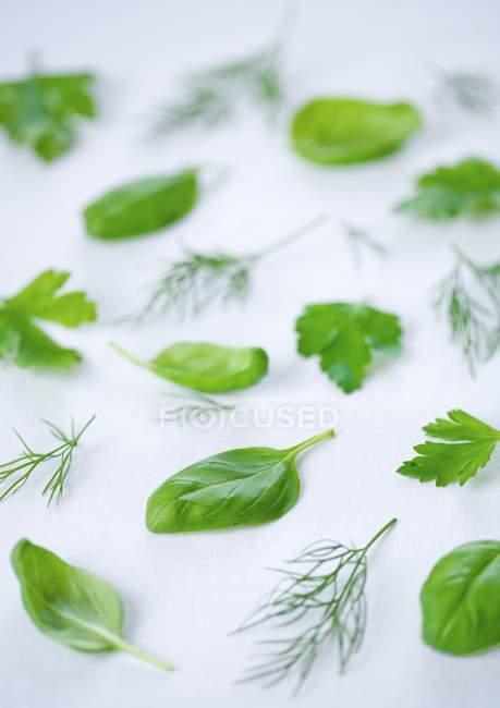 Fresh herbs pattern — Stock Photo