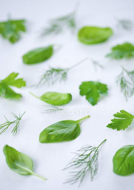 Fresh herbs pattern — Stock Photo