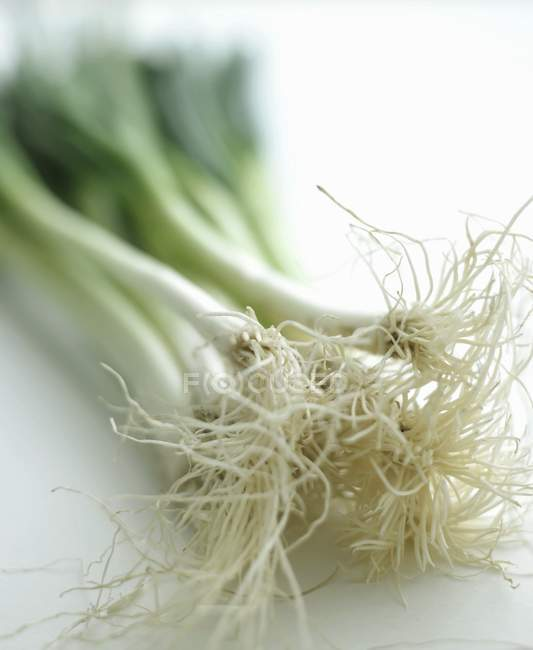 Fresh spring onions — Stock Photo