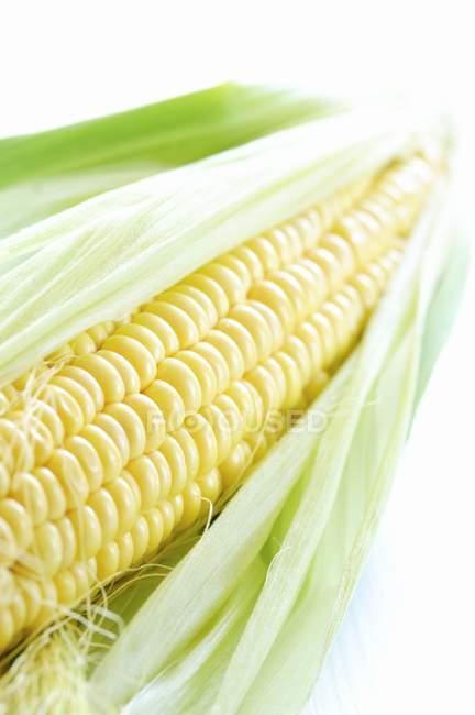 Corn on cob with husks — Stock Photo