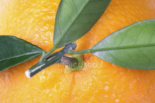 Orange with a stalk and leaves — Stock Photo