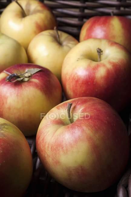 Mitsu apples at market — Stock Photo