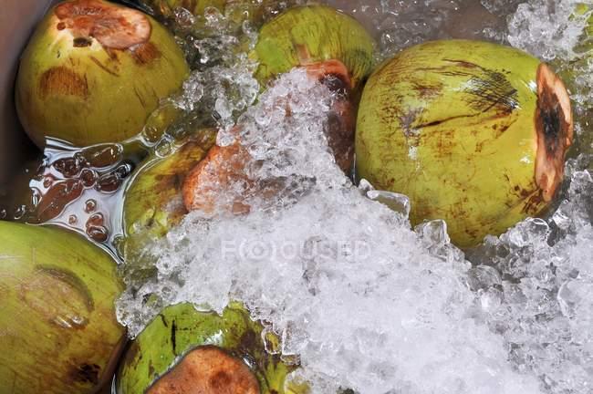 Cocos en agua con hielo - foto de stock
