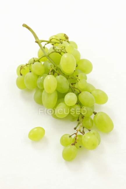 Bunch Green grape — Stock Photo