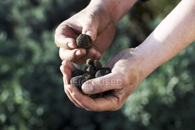 Holding black truffles — Stock Photo