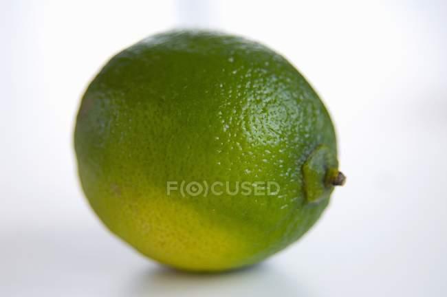 Closeup Whole Lime — Stock Photo
