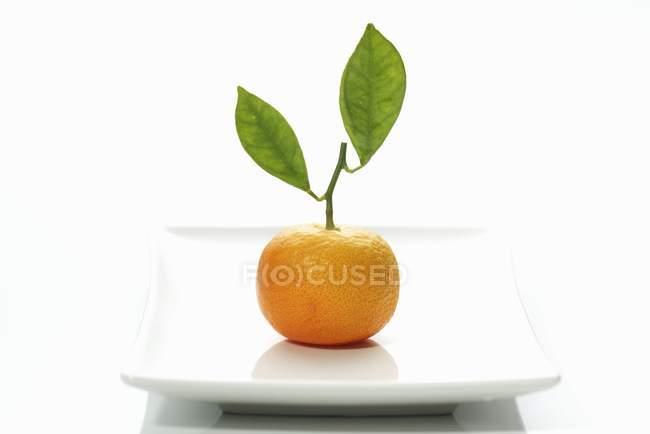 Clementine mit Blättern — Stockfoto