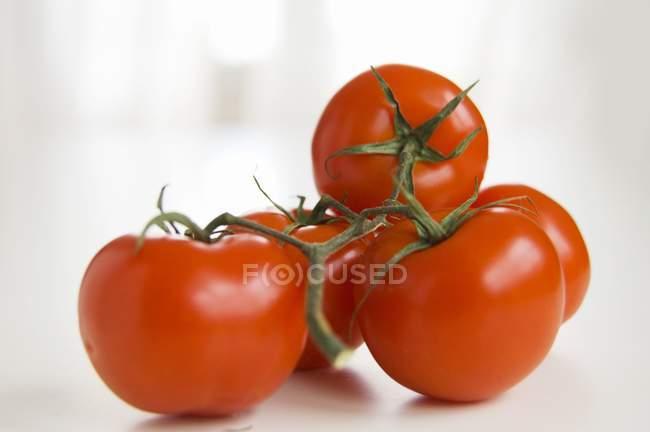 Красные томаты — стоковое фото