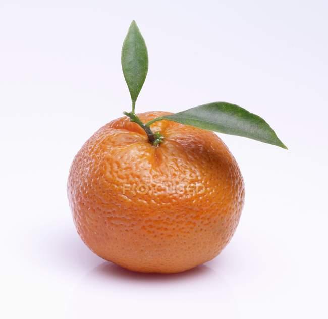 Mandarine Orange mit Blättern — Stockfoto