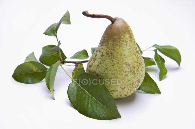 Whole pear with leaves — Stock Photo