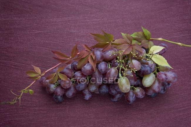 Bunch of red grapes on vine — Stock Photo