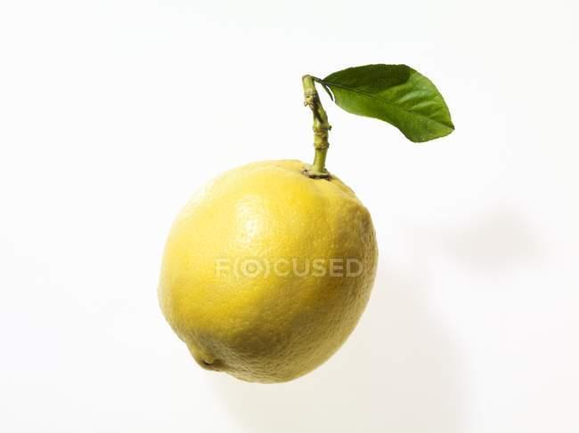 Zitrone mit Zweig und Blätter — Stockfoto