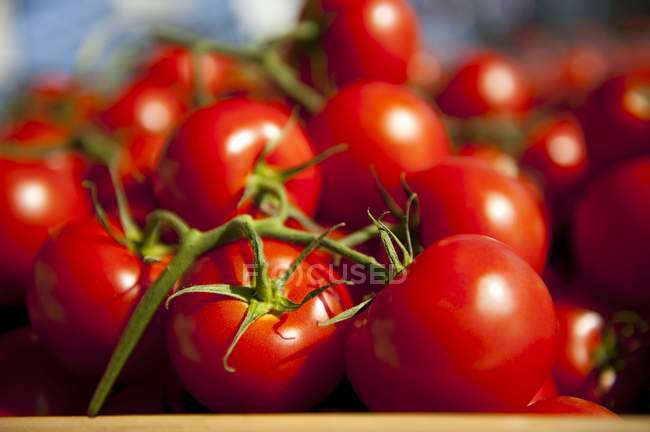 Fresh vine tomatoes — Stock Photo