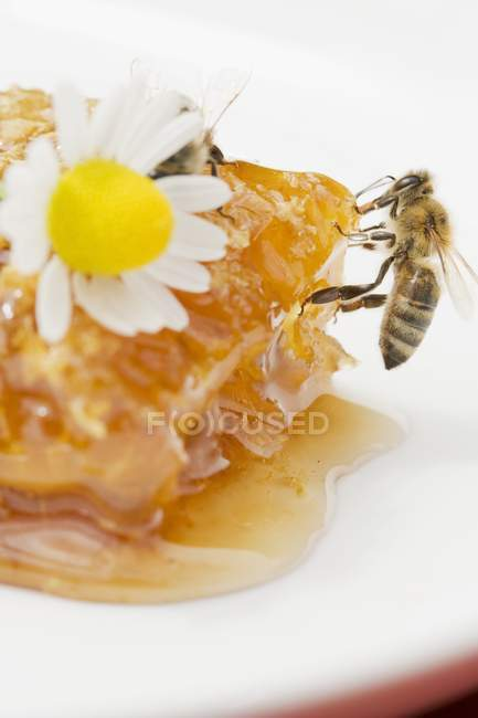 Honeycomb, bee and daisy — Stock Photo