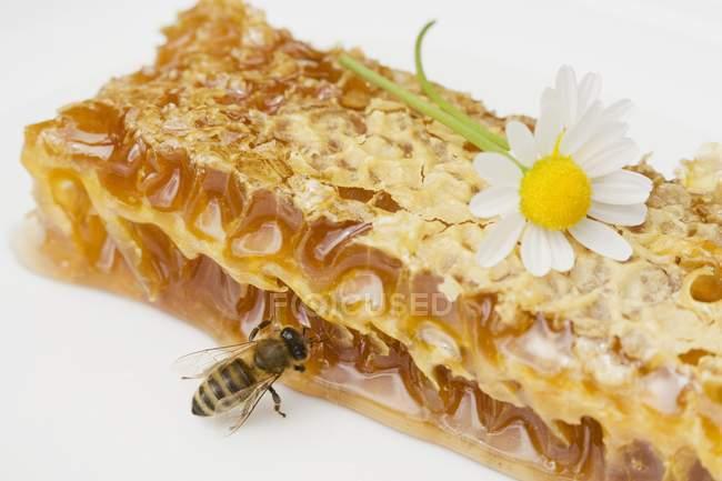 Honeycomb, bee and daisy — Stock Photo